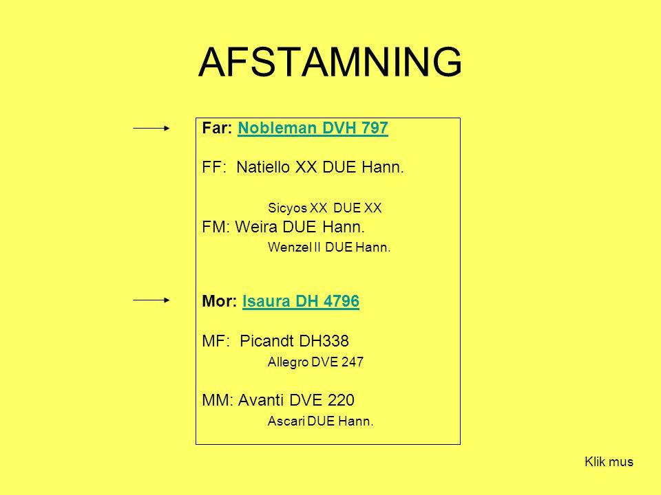 AFSTAMNING Far: Nobleman DVH 797Nobleman DVH 797 FF: Natiello XX DUE Hann.