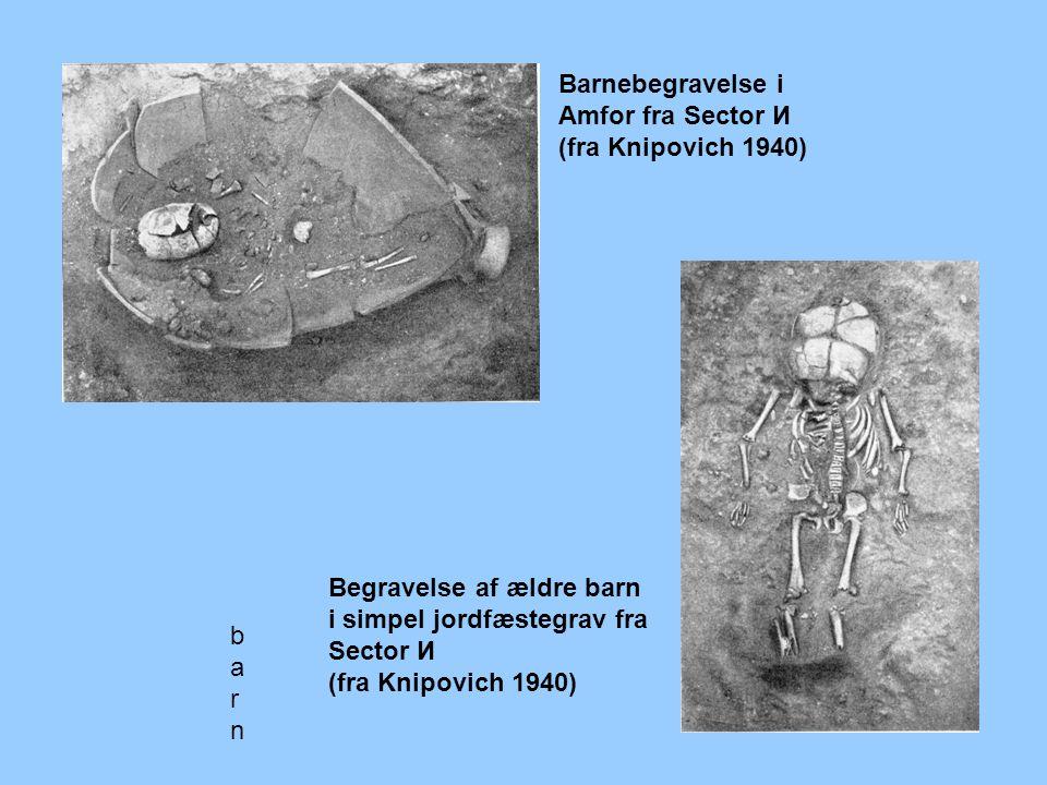barnbarn Barnebegravelse i Amfor fra Sector И (fra Knipovich 1940) Begravelse af ældre barn i simpel jordfæstegrav fra Sector И (fra Knipovich 1940)