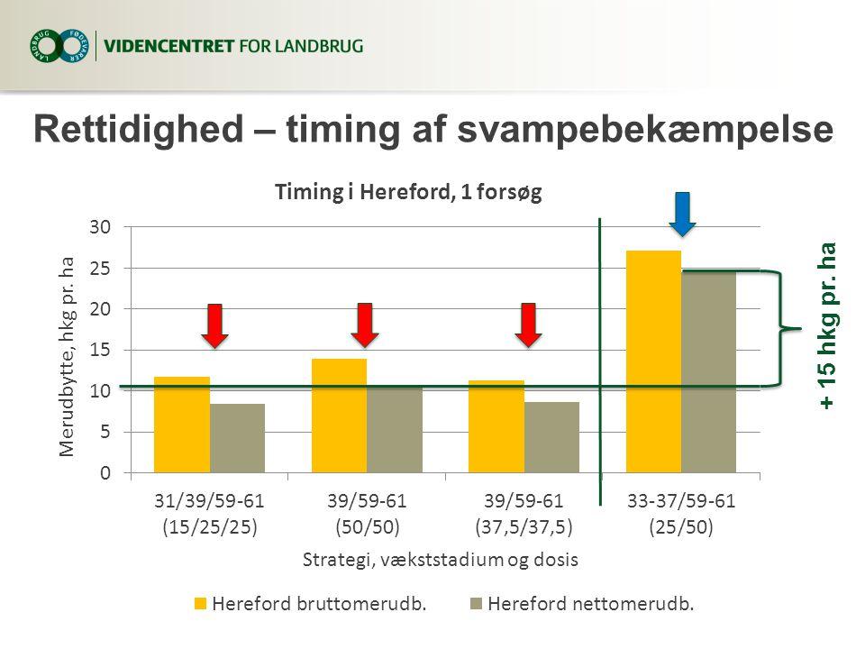 Rettidighed – timing af svampebekæmpelse + 15 hkg pr. ha