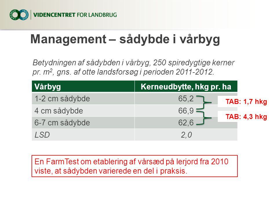 Management – sådybde i vårbyg VårbygKerneudbytte, hkg pr.