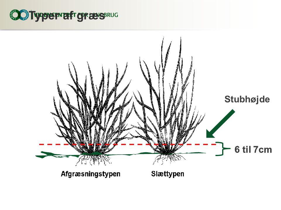 Typer af græs 6 til 7cm Stubhøjde 6 til 7cm
