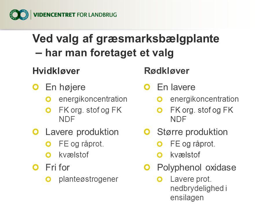 Ved valg af græsmarksbælgplante – har man foretaget et valg Hvidkløver En højere energikoncentration FK org.