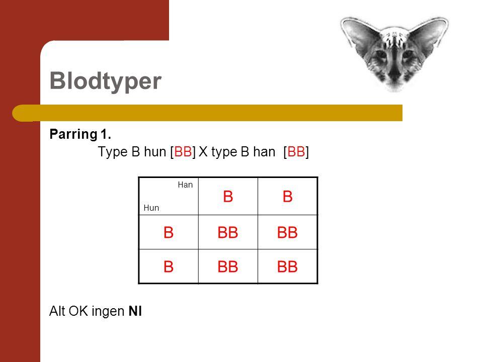 Blodtyper Parring 1. Type B hun [BB] X type B han [BB] Alt OK ingen NI Han Hun BB BBB B