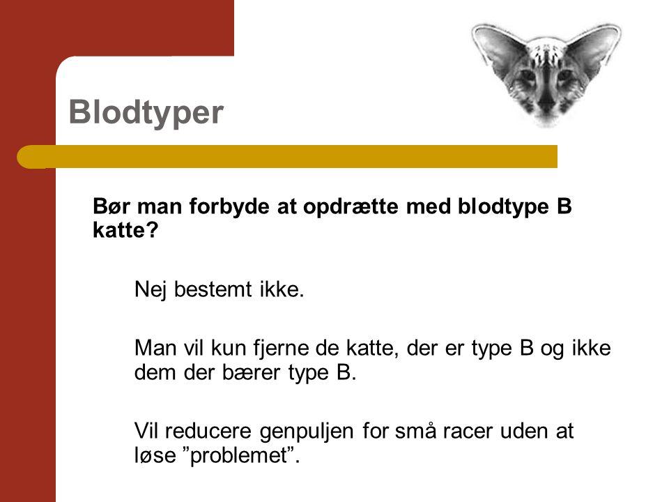 Blodtyper Bør man forbyde at opdrætte med blodtype B katte.