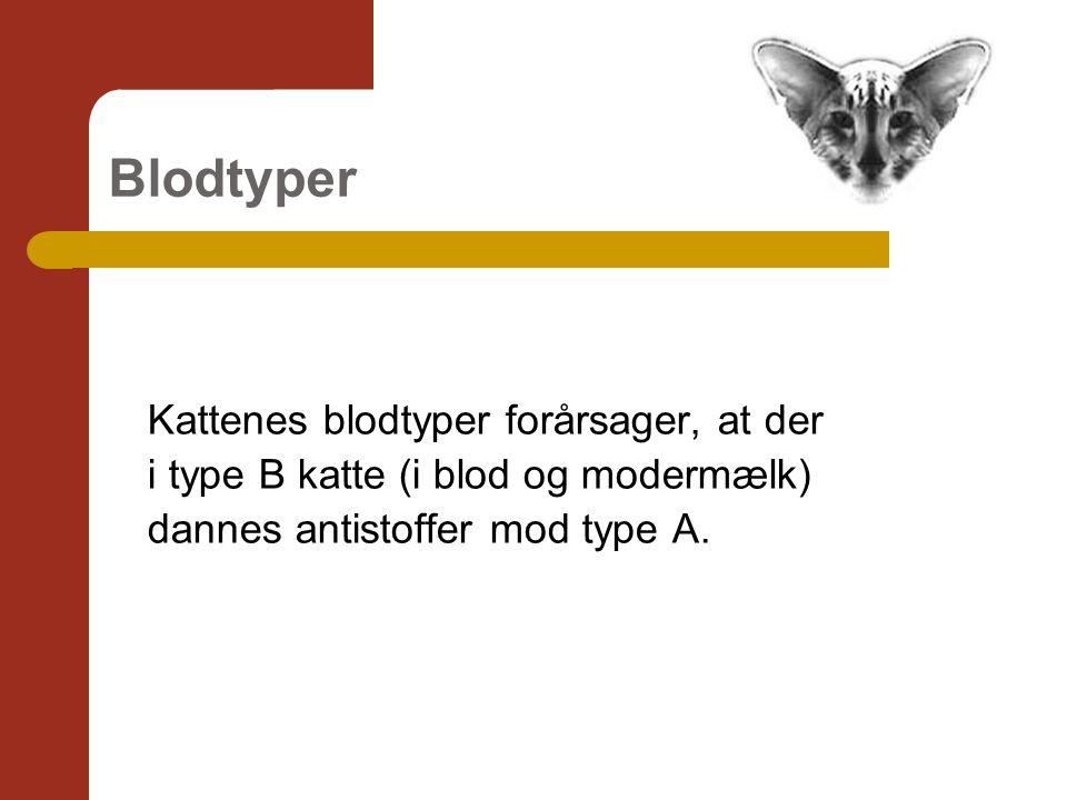 Blodtyper Kattenes blodtyper forårsager, at der i type B katte (i blod og modermælk) dannes antistoffer mod type A.