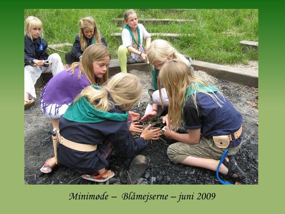 Minimøde – Blåmejserne – juni 2009