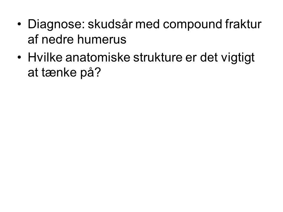 Diagnose: skudsår med compound fraktur af nedre humerus Hvilke anatomiske strukture er det vigtigt at tænke på?