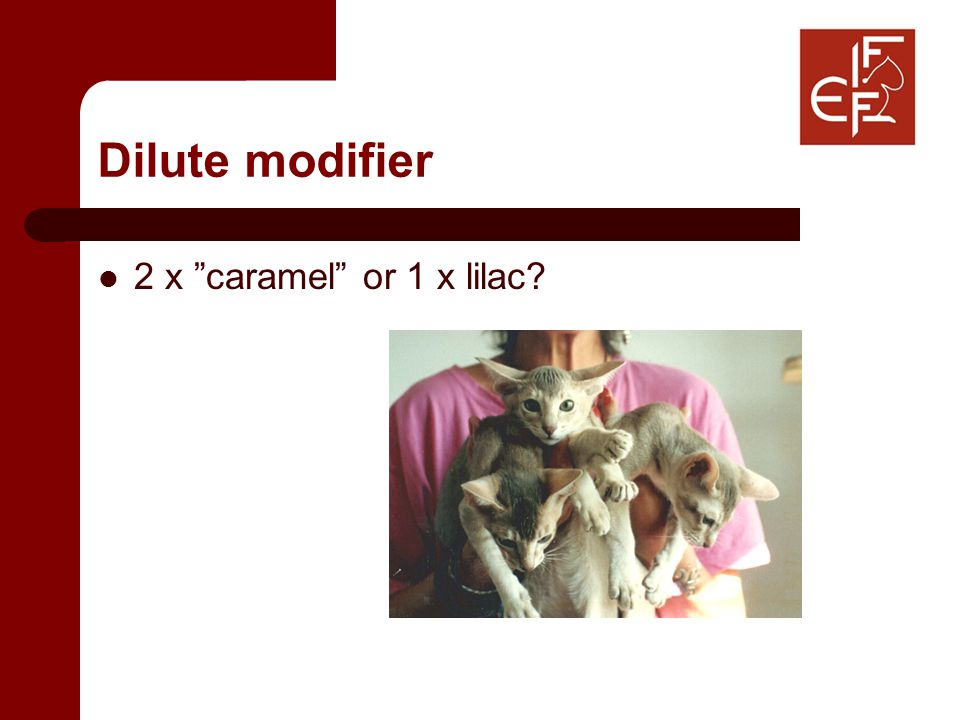 Dilute modifier 2 x caramel or 1 x lilac