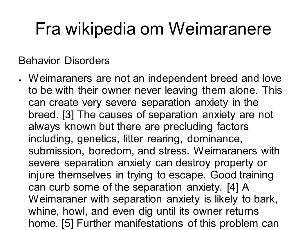 Fra wikipedia om Weimaranere Behavior Disorders ● Weimaraners are not an independent breed and love to be with their owner never leaving them alone.