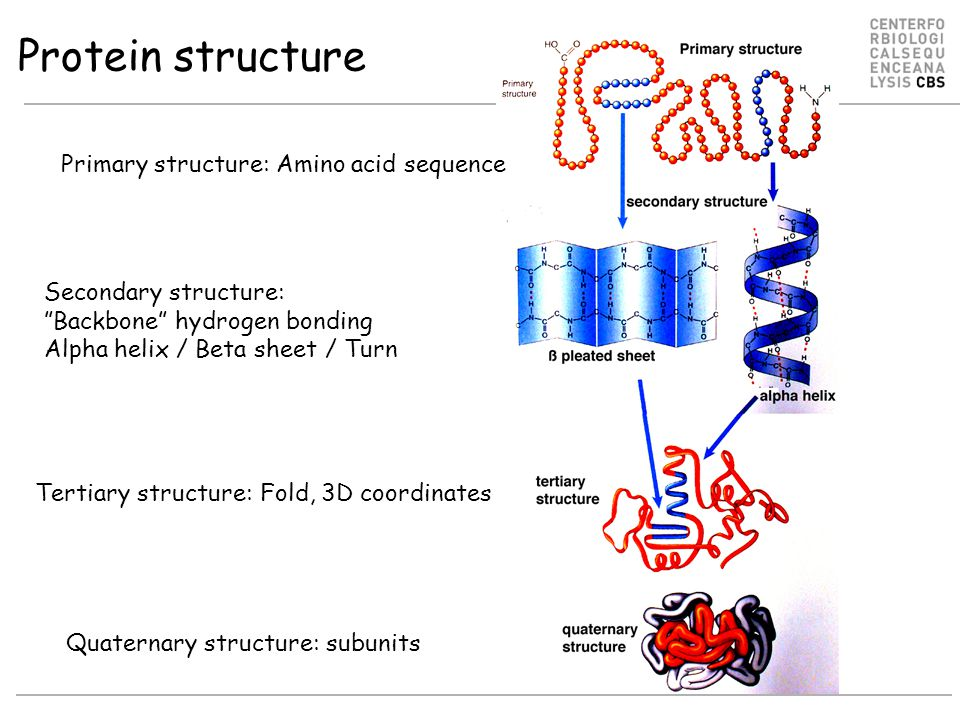 Protein structure Primary structure: Amino acid sequence Secondary structure: Backbone hydrogen bonding Alpha helix / Beta sheet / Turn Tertiary structure: Fold, 3D coordinates Quaternary structure: subunits