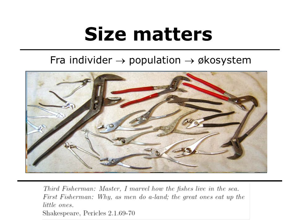 Size matters TexPoint fonts used in EMF: AAAAA Fra individer  population  økosystem